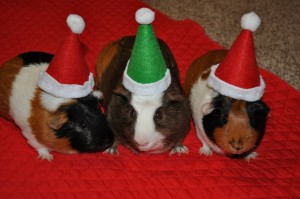 Mr. Squiggles & his lady elves, Itsy & Bitsy